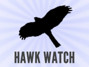 box-hawkwatch