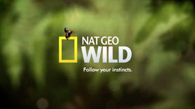 national_geo_wild_logo